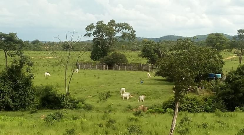 Cod. 039 -Fazenda em Paranatinga