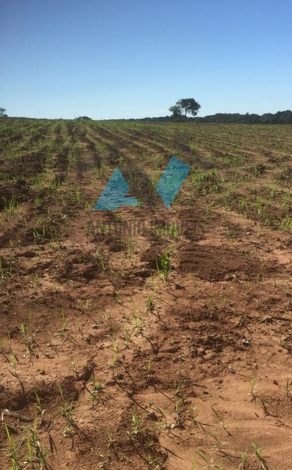 Cod. 285 – Fazenda As margens da MT-020 com 1589 hectares